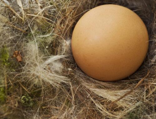 Jaja z chowu na wolnym wybiegu