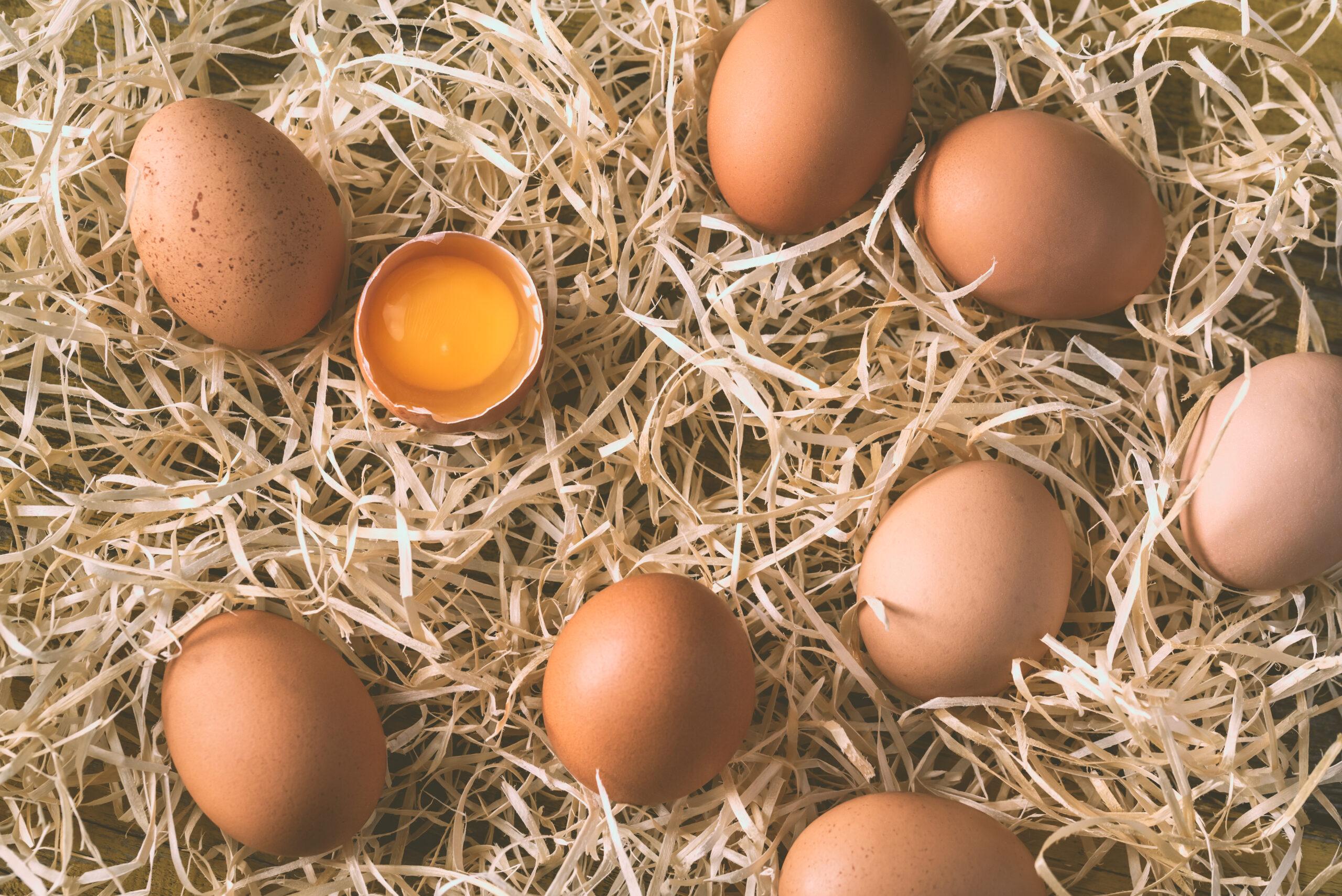 jaja kurze - chow sciolkowy